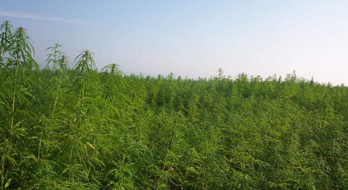 Infographic: Assessing Hemp's Potential In The Cannabis Industry