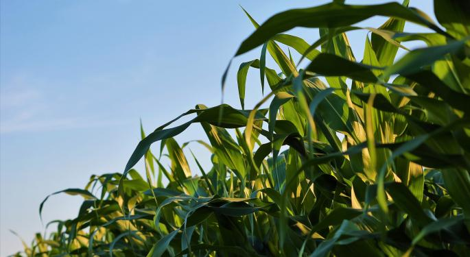 Evogene Tackles Corn Crop Fungal Diseases With Bayer