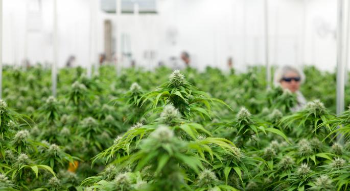 Cantor Fitzgerald On Aurora Cannabis: Buy The Dip