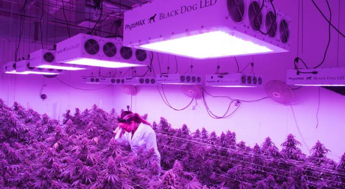 Black Dog LED, A Major Cannabis Lighting Provider, Has Plans For 'All Corners Of The Grow Operation'