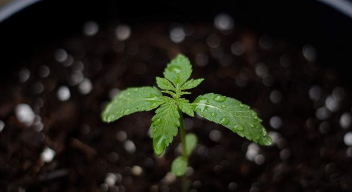 Michigan Marijuana Regulatory Agency's Latest Weekly Licensing Report