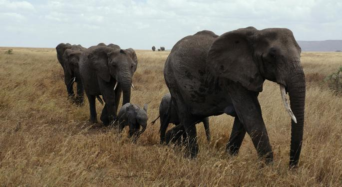 3 Countries Try To Re-Legalize International Ivory Sales