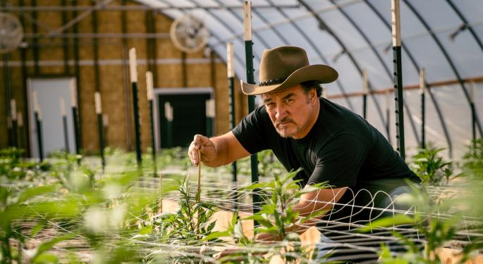 Jim Belushi, Weed Farmer: 'I Believe In The Spirit And Medicine Cannabis Offers'
