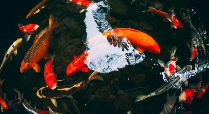 Using Live Fish To Grow Weed: Introducing Aquaponics