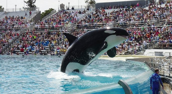 SeaWorld Spikes After Report That Its Killer Whale Show Is Ending