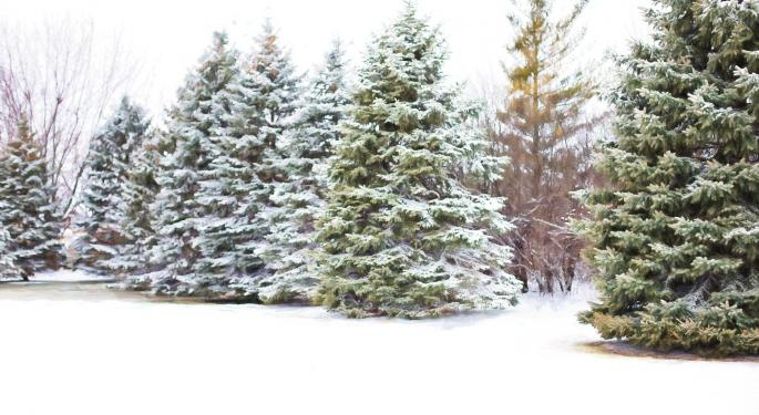 Mexico Tops List Of International Importer Of Christmas Trees From Oregon And Washington