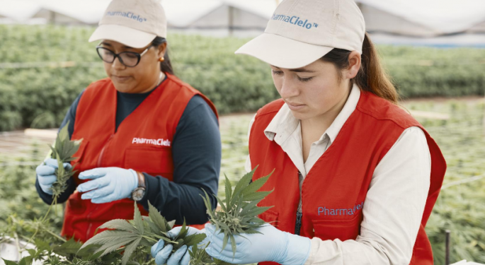 Colombian Cannabis Cultivator PharmaCielo Enters US Market