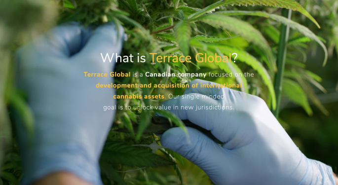 Meet Terrace Global, The Cannabis Company Created By MedReleaf, Tokyo Smoke, ICC Labs Founders