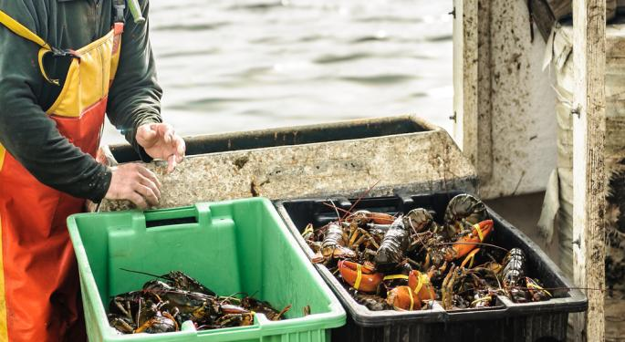 The Struggle Is Real: Lobster Exporters Left Gasping Over Chinese Trade Tariffs