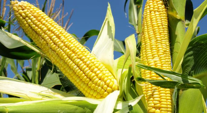 Corn Hits New Low, Larger Yield Expected  CORN