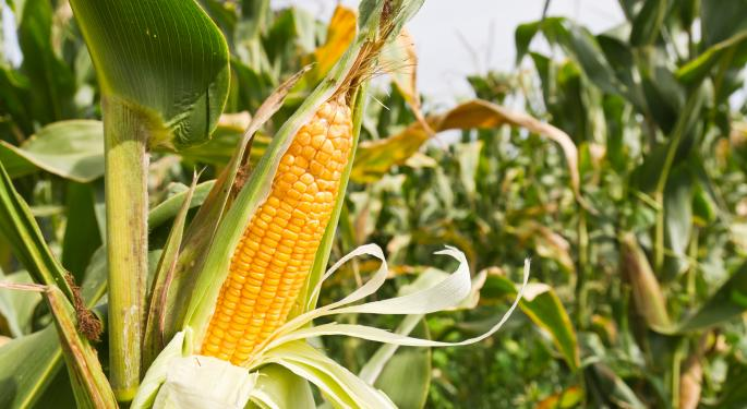Will New Corn Prices Go Up or Down? CORN