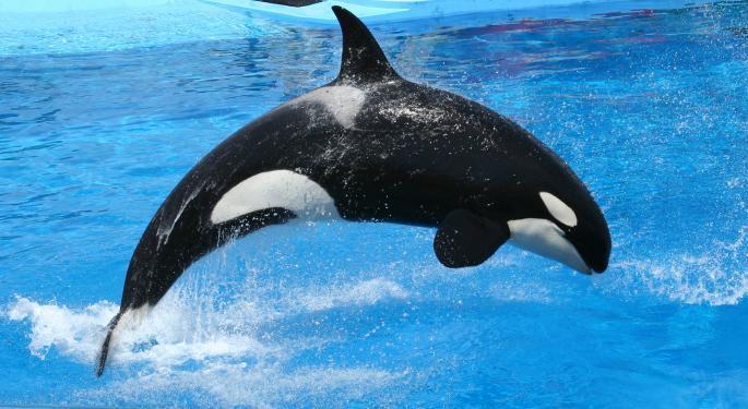 Own a Stake in SeaWorld's Shamu Starting Friday