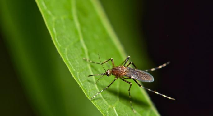 Giant Mosquitoes A Public Health Issue During Hurricane Michael Clean Up