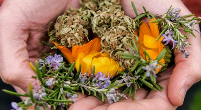 Sun+Earth Certified Issues Regenerative Organic Farming, Fair Labor Standards For Cannabis Cultivation